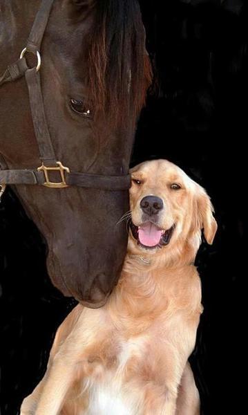 hond en paard 1